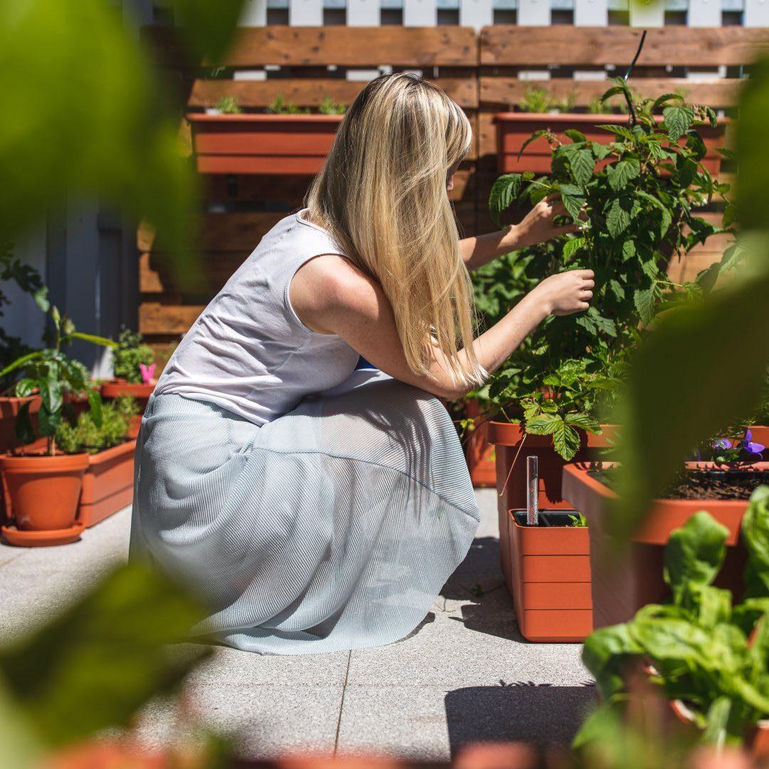 Balkónová zahradnice